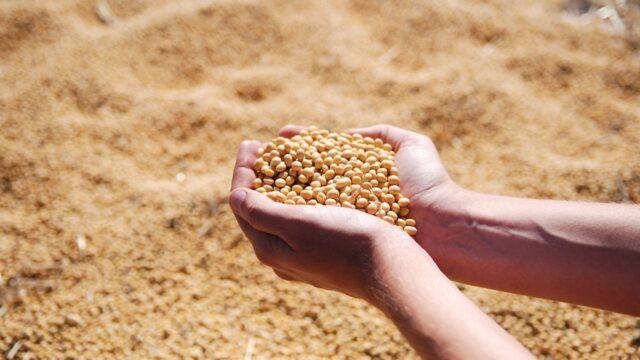 大豆の製造